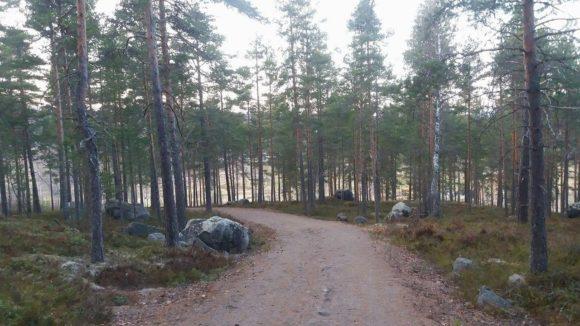 Backtraning Falun