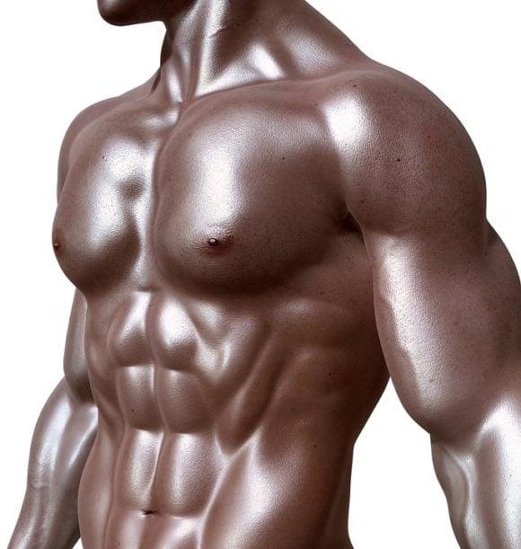 Magmuskler anatomi